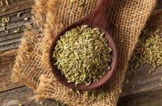 Анис — полезные свойства растения