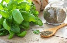 Сушеный базилик — полезные свойства и применение