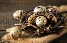 Перепелиные яйца — польза и вред для организма