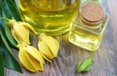 Польза и вред эфирного масла иланг-иланг