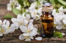 Применение эфирного масла жасмина