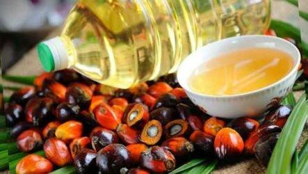Пальмовое масло — польза или вред
