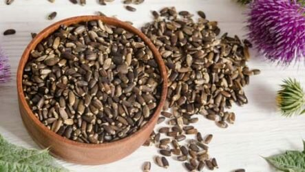 Полезные свойства семян расторопши